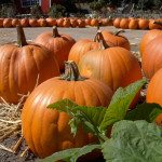 Senior Care Activities: Tips for Making Your Carved Pumpkin Last Longer